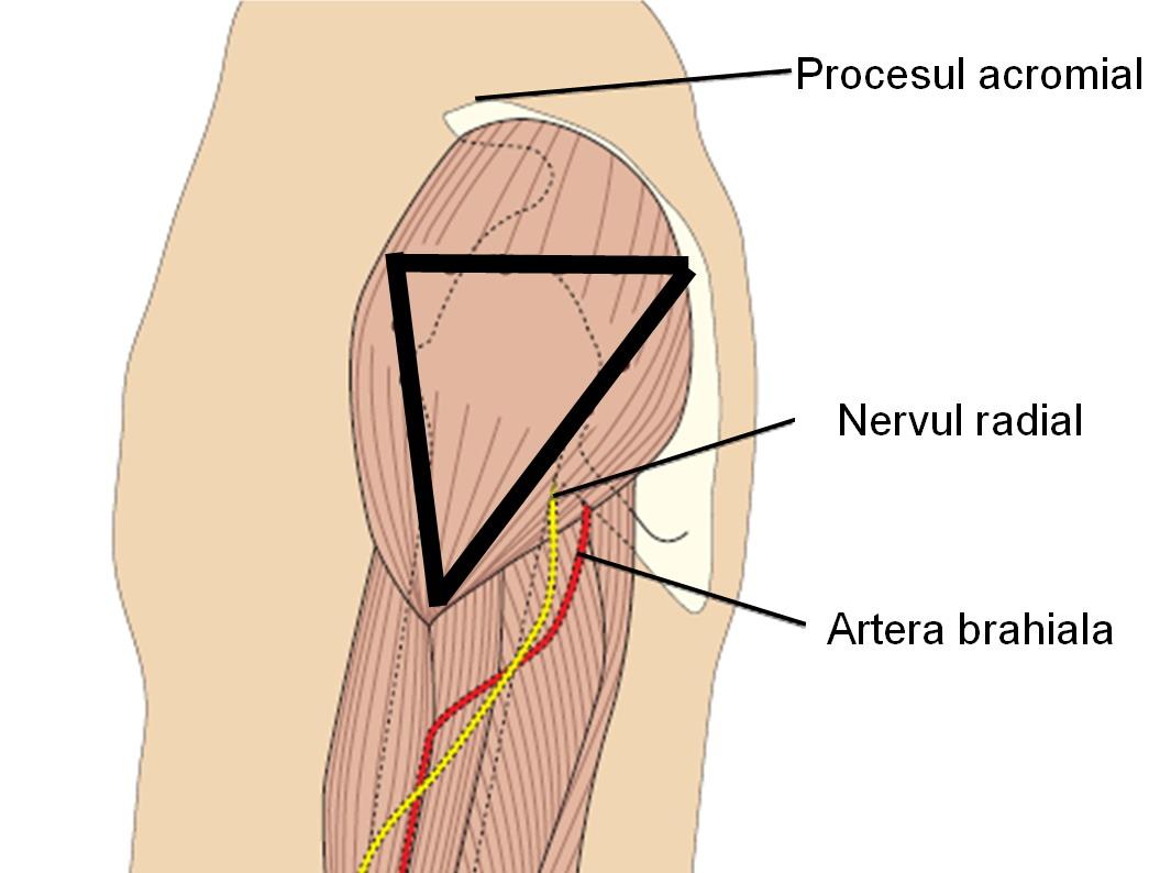 poate răni articulațiile din concor remediu ieftin pentru articulații