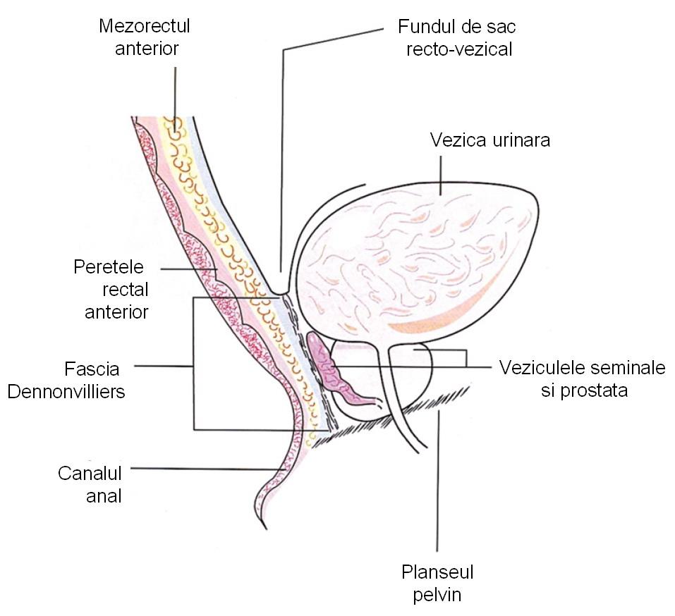 ce este o venă varicoasă a fundului pelvian